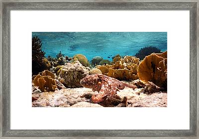 Run And Hide Framed Print