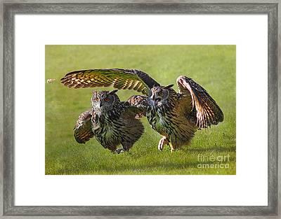 Run For The Bread Framed Print by Wobblymol Davis