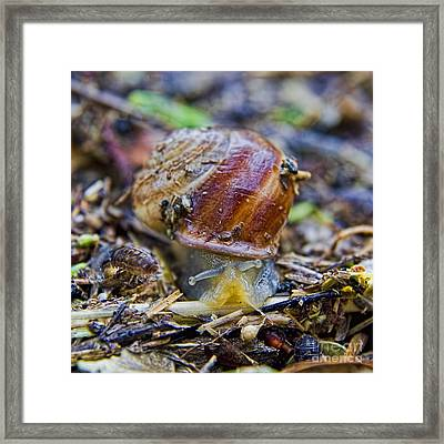 Run For Your Lives Framed Print by Gary Holmes