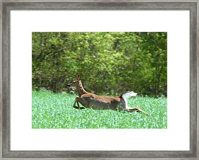 Framed Print featuring the photograph Run Forest Run by Neal Eslinger