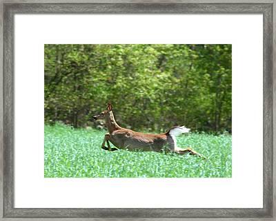 Run Forest Run Framed Print by Neal Eslinger