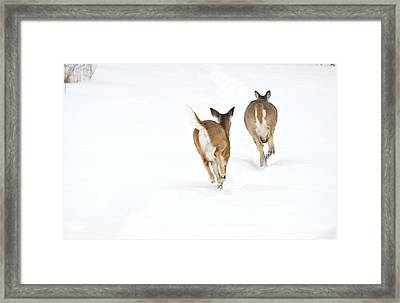 Run Forrest Run Framed Print