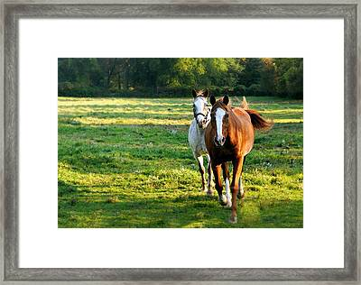 Run To Me Framed Print by Diana Angstadt