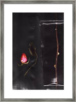 Runaround Framed Print by Mark Ross