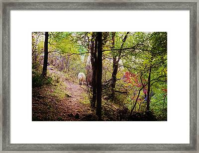 Running Away  Framed Print by Shirley Heier