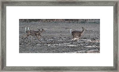 Running Deer In The Mud Framed Print