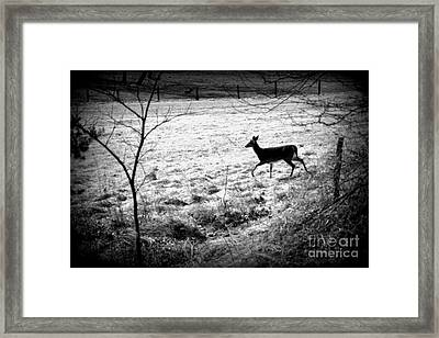 Running Deer Framed Print