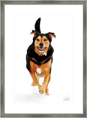 Running Dog Art Framed Print by Christina Rollo