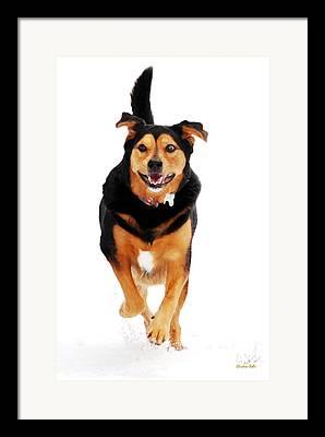 Dog Running Mixed Media Framed Prints