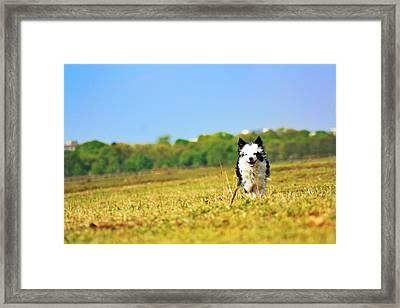 Running Dog Framed Print by Daniel Precht