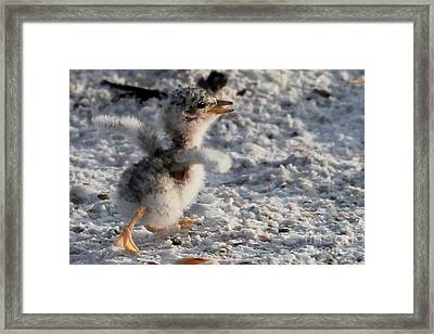 Running Free - Least Tern Framed Print