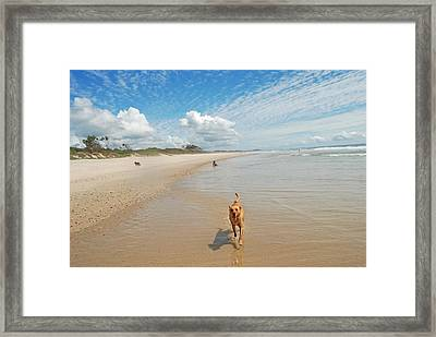 Framed Print featuring the photograph Running Free 2 by Ankya Klay