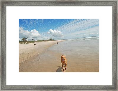 Framed Print featuring the photograph Running Free 3 by Ankya Klay