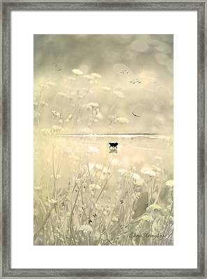 Framed Print featuring the photograph Running Free by Chris Armytage