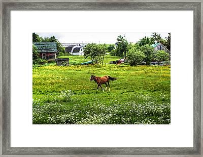 Running Free Framed Print by Gary Smith