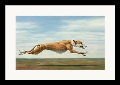 Greyhound Drawings Framed Prints