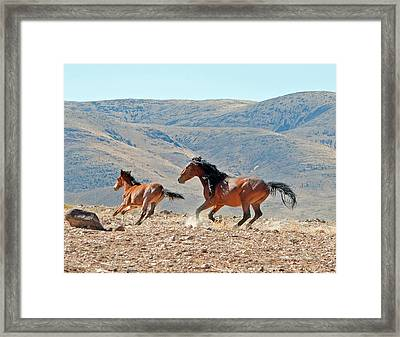 Running Free Framed Print by Lula Adams