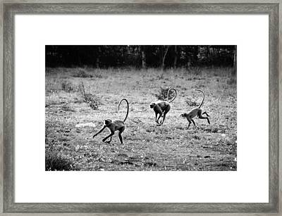 Running Gibbons Framed Print by Money Sharma