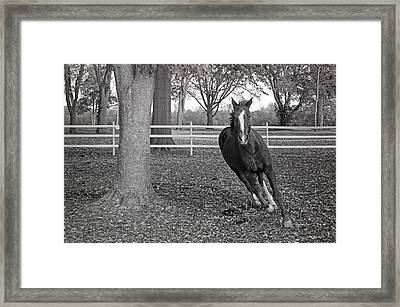Running Horse Framed Print by Steven Michael