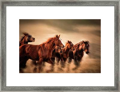 Running Horses, Blur And Flying Manes Framed Print by Sheila Haddad