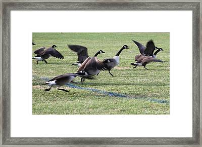 Framed Print featuring the photograph Running Start by Robert Banach