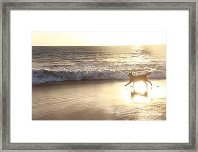 Running Through The Light Framed Print
