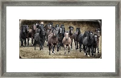 Running Wild D9464 Framed Print by Wes and Dotty Weber