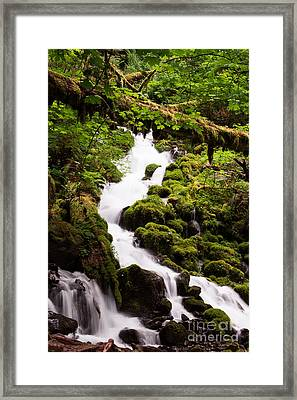 Framed Print featuring the photograph Running Wild by Suzanne Luft