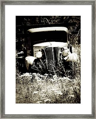 Running Wild Framed Print by Terry Eve Tanner