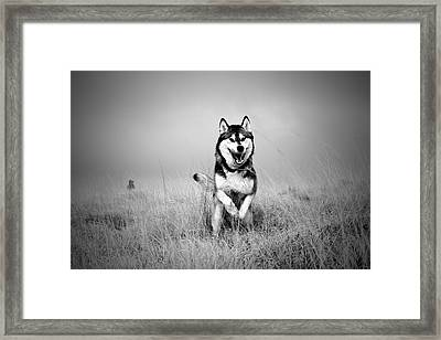 Running Wolf Framed Print