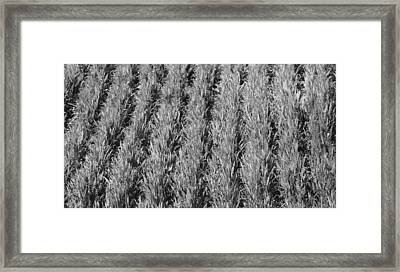 Rural America Black And White Framed Print by Dan Sproul