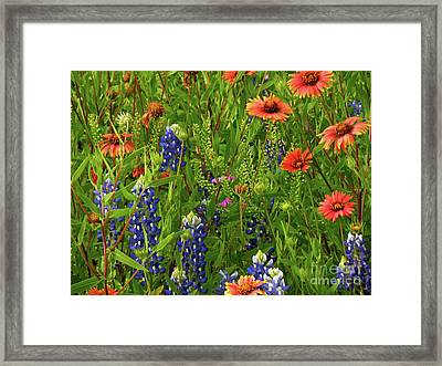 Rural Color Framed Print by Joe Jake Pratt