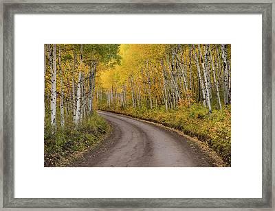 Rural Forest Service Road And Golden Framed Print