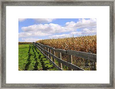 Rural Landscape With Fence Framed Print by Elena Elisseeva