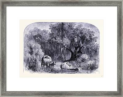 Rural Life United States Of America Framed Print by American School