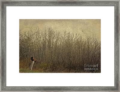 Rural Mailbox Framed Print