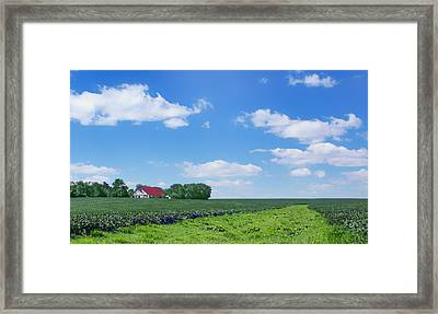 Rural Midwest - Summer Framed Print by Nikolyn McDonald
