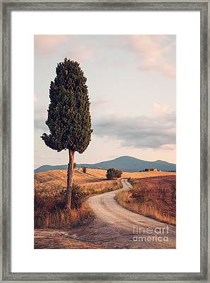 Rural Road With Cypress Tree In Tuscany Italy Framed Print by Matteo Colombo