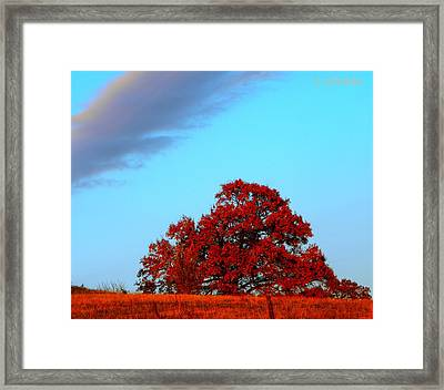 Rural Route Framed Print by Chris Berry