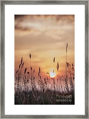 Rural Sunset Framed Print by Jan Bickerton