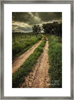 Rural Trail Framed Print by Carlos Caetano