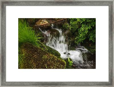Rushing Mountain Stream And Moss Framed Print