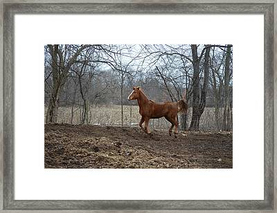 Russian Arabian2 Framed Print by Jennifer  King