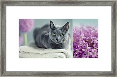 Russian Blue Collage Framed Print by Nailia Schwarz