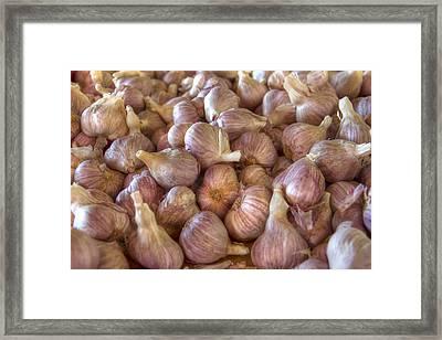Russian Garlic Framed Print by Eti Reid