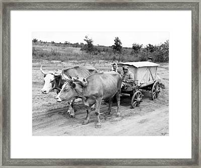 Russian Peasants With Ox Cart Framed Print by Underwood Archives