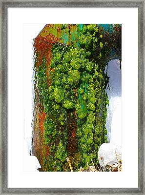 Rust And Moss Framed Print