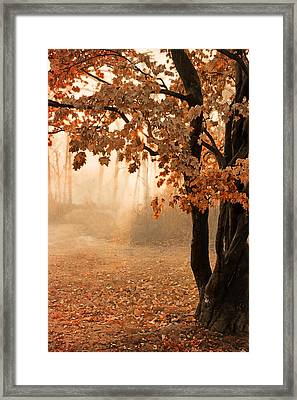 Rust Apricot Orange Maple Autumn Sunrise Framed Print