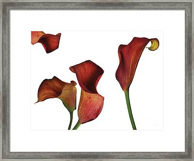 Rust Calla Lily Collage Framed Print
