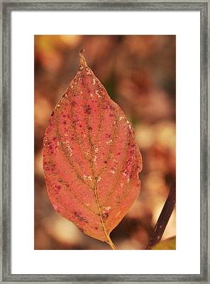 Rusted Framed Print by Puzzles Shum